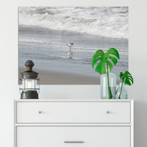 Ink and Byte - Piping Plover Set of 3 Printable Wall Art for your home, office and anywhere else